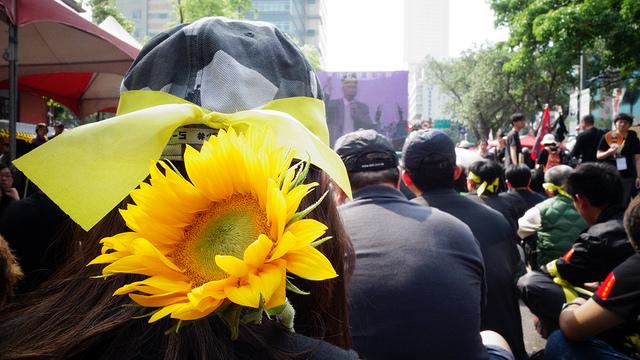 taiwansunflower