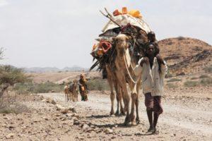 ethio camel drought