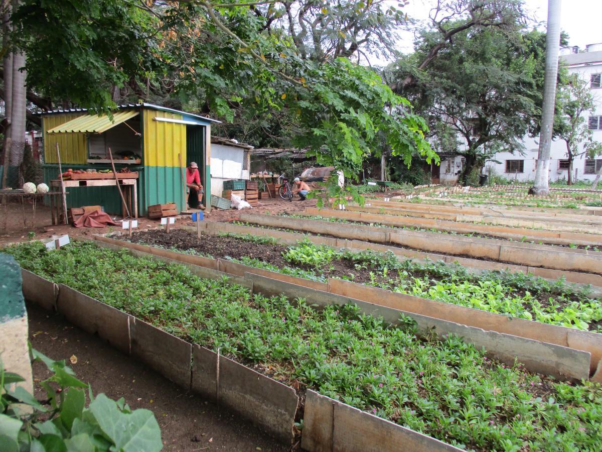 Havana farm