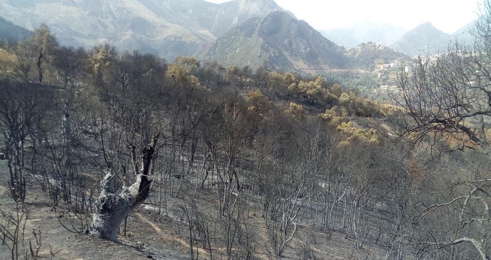kabylia fire